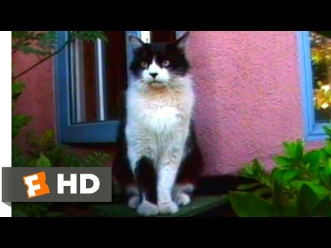 A Cat's Tale (2008) - Marchello Escapes Scene (1/10) | Movieclips