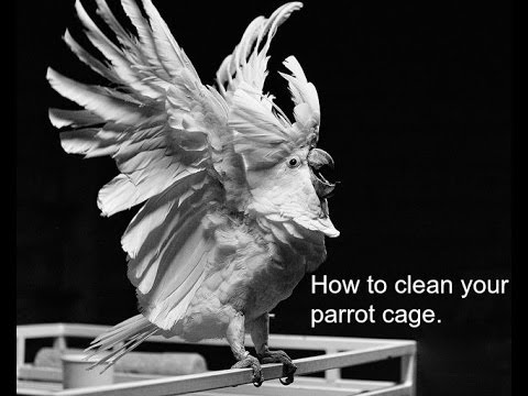 How to clean your parrot cage