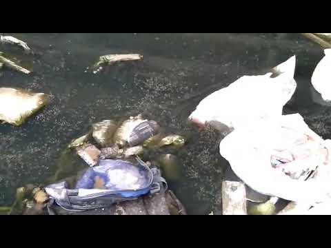 কুড়িল বিশ্বরোড ফ্লাইওভারের পাশের লেক সংলগ্ন ডেঙ্গু মশার ফ্যাক্টরি
