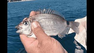 Рыбалка на Чёрном море 2018г. с лодки у берегов Евпатории ласкирь, барабуля, ставрида и дракончик.