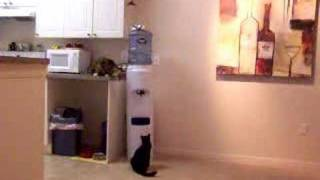 Cat gets it's own drink from water cooler