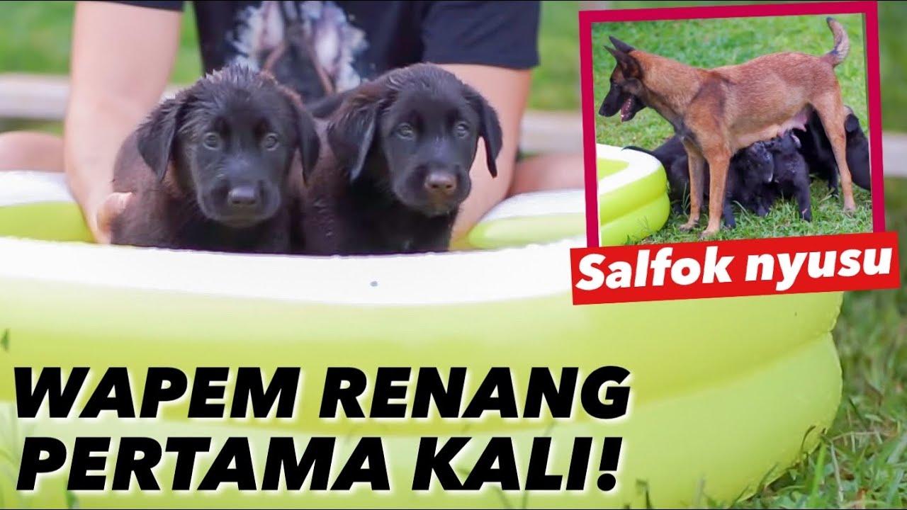 SAAT WAPEM MASIH BULET DAN GEMASH! RENANG PERTAMA KALI..