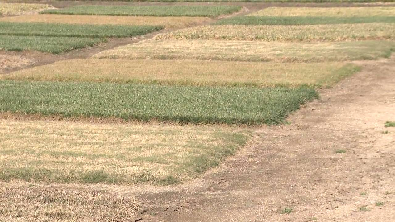 Growing Grass : How Often to Apply Miracle-Gro to Grass