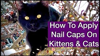 How To Apply Nail Caps To Cat. Alternative To Declaw Kitten. DIY Feline Claw Care. Stop Scratches.