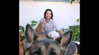 Dog Training San Diego |train Your Dog Or Puppy |  Karma Dog Training