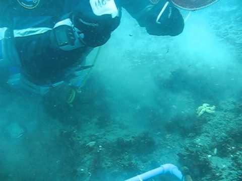 Sampling sea urchins in King George Island