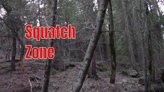 Checking out a Bigfoot sighting, and a possible Bigfoot experience.