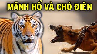 """Chuyện của Mãnh Hổ và Chó Điên- Đọc và ngẫm, hầu hết chúng ta sẽ có """"thu hoạch""""!"""