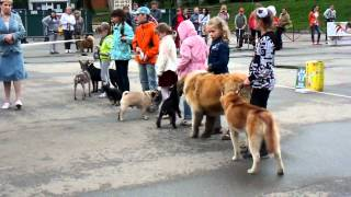 Сыктывкар. ребенок и собака младшая группа.MP4