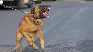 اشخاص يضربون طفل قدام كلب شرس !! انصدمت من اللي صار