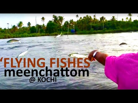 Flying Fishes at Kochi: Malipuram, Matsyafed Aqua tourism