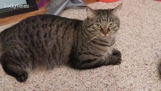 A New First For Splash, Broken Houses, Muse Wet Cat Food - S3 E121 Cat Vlog