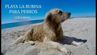Vamos a la playa admiten perros!!! Playa La Rubina - Empuriabrava | Noe and Carl