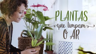 Plantas em Todos os Cômodos da Casa – Sala, Quarto e Cozinha