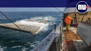 Hoe voor succesvolle pulsvisserij toch financiële strop dreigt