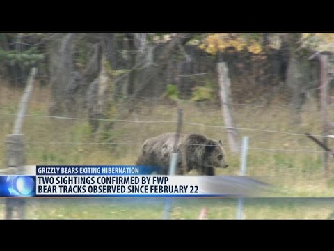 Yellowstone staff confirms first Grizzly sighting of the year
