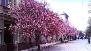 Крым / Симферополь / прогулка выходного дня