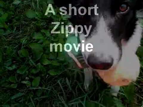A short Zippy  movie