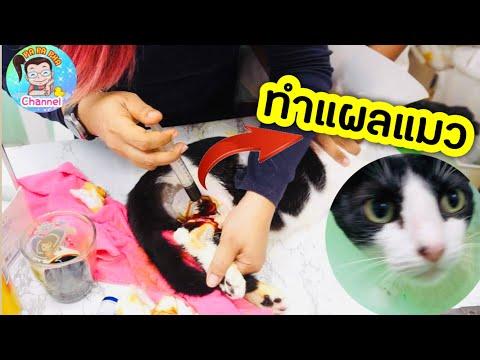 วิธีล้างแผลแมว ด้วยตัวเอง ทำง่ายๆที่บ้าน 🤨