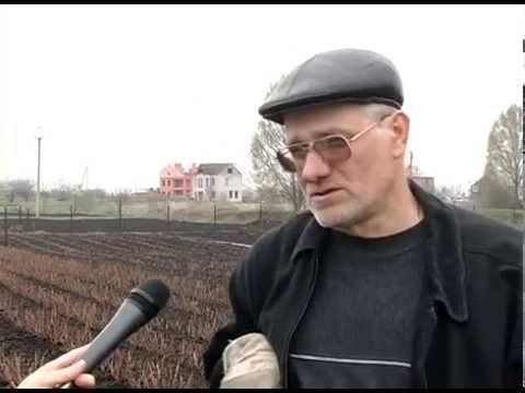 РОР / САЖЕНЦЫ ПИТОМНИКА / Почвопокровные розы