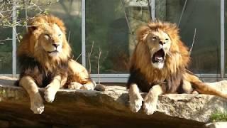 Lustige Tiere sprechen, rülpsen & furzen wie Menschen [HD]