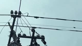 雨の中、電線にとまっているツバメさんを見つけました 。可愛いです ま...
