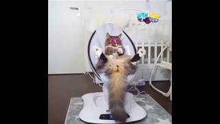 Funny Animals Compilation! Cute Cats & Dogs [Try Not To Laugh]