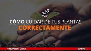 Cómo cuidar de tus plantas correctamente | El Mundo Today 24H