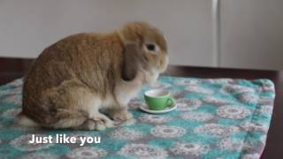 Cute Bunny Makes Potty Training Easier