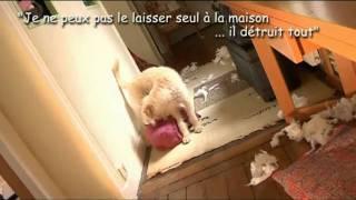 Prévention des morsures de chiens (vol.1)