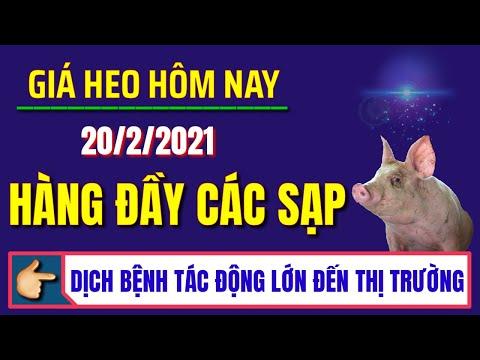 Giá heo hơi hôm nay ngày 20/2/2021   Nhu cầu đang dần trở lại bình thường, giá lợn hơi giảm nhẹ