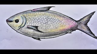 how to draw beautiful fish hilsa | easy arts using Pencil  oil pastel