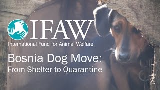 Bosnia Dog Move: From Shelter to Quarantine