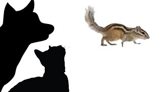 CAT GAMES - INVASION OF THE CHIPMUNKS (FOR CATS ONLY)