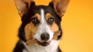 "Pedigree Denta Stix - Реклама ""чистки зубов для собак"")"