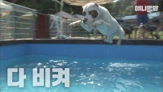 수영장에서 만나면 피하고싶은 서타일.. ㅣ Type Of Dog You Would Avoid In The Swimming Pool