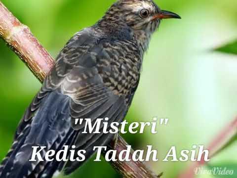 Burung pertanda kematian