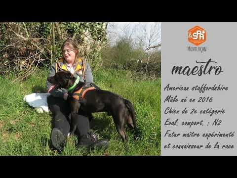 A L Adoption Au Refuge Spa De Montlucon Maestro Youtube