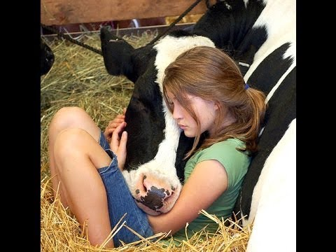 Tony Sandoval on The Breeze - Cow Cuddling is a Wellness Trend that's Becoming Popular.