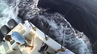 Yellowfin Tuna & Swordfish fishing - RED - Hydrographer Canyon