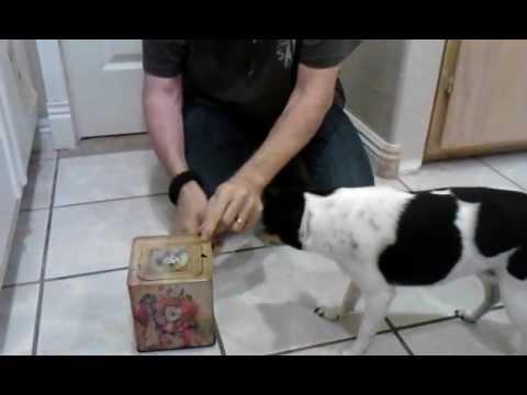 dog-vs.-jack-in-the-box