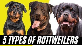 Rottweiler Types  5 Types of Rottweilers