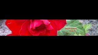 Gods Liefde is ook voor jou - open je hart - Harry Kamphuis