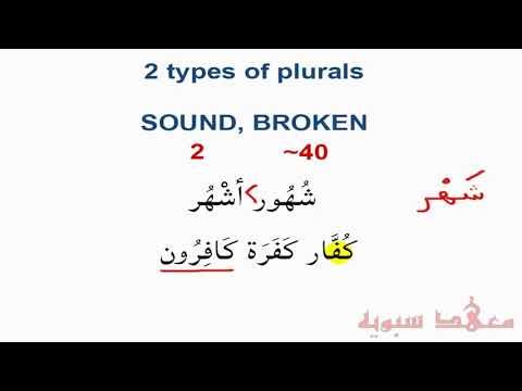 PLQ: Plurals in the Quran (Excerpt)