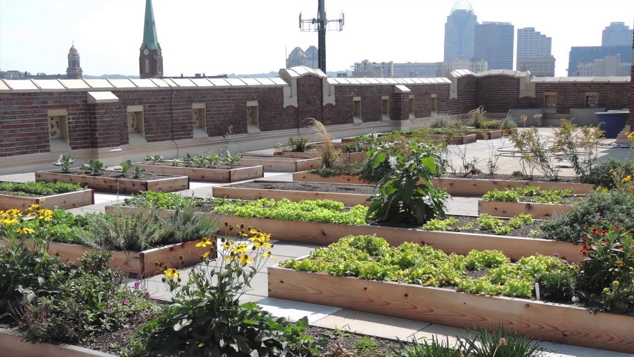 Green Roofs: The Urban Gardens of the Future | Angelic ...