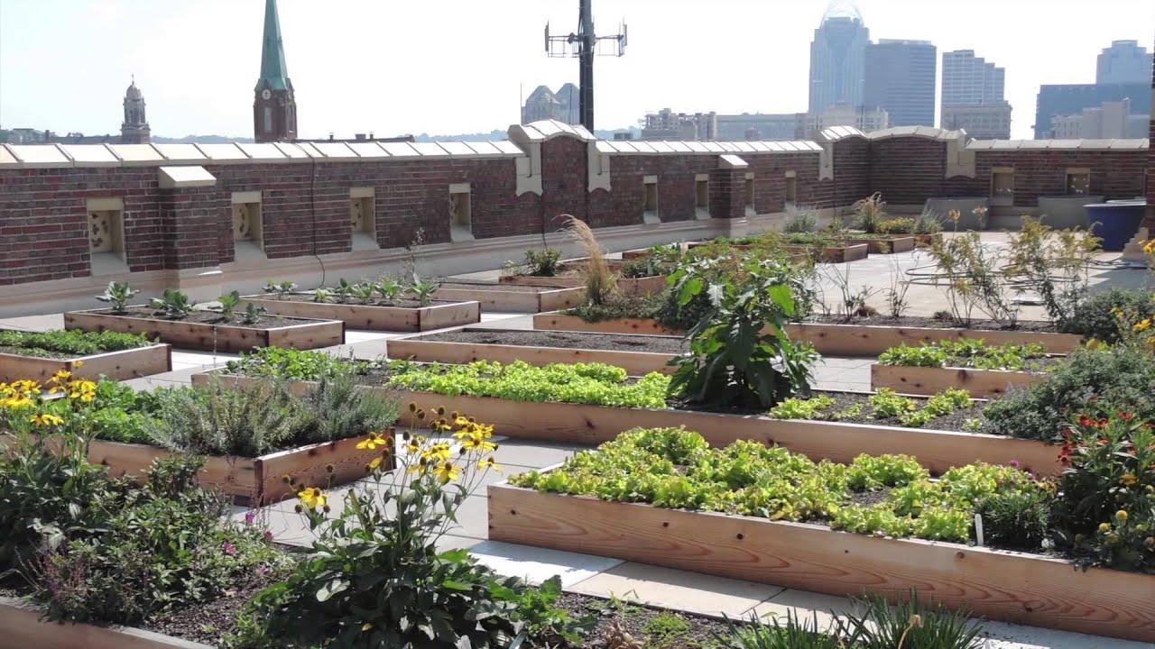 rooftop garden Rothenberg Rooftop Garden - Project of the Week 11/3/14