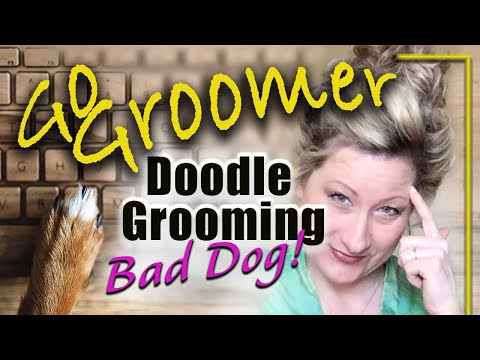 Doodle Grooming-Bad Dog!