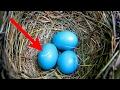 Awalnya dikira telur bebek, tapi begitu menetas ternyata yg keluar bukan bebek tapi ini