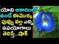 యోని ఆకారంలో ఈ మొక్క పువ్వు ఉపయోగాలు తెలిస్తే షాక్ | Uses of Sanku Pushpam Plant |
