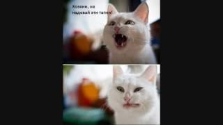 Смешные фото котов и собак